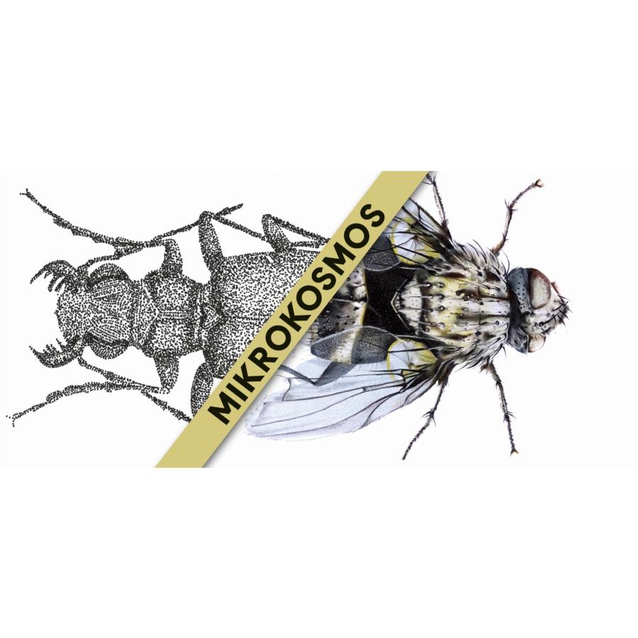 #136 CLARISSA SCHWARZ & MARTINA LUDWIG – «MIKROKOSMOS» (Doppel-Ausstellung)